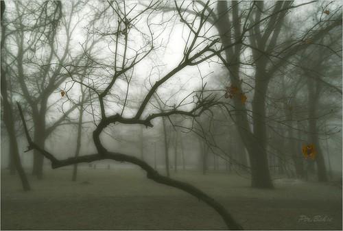 park city morning winter art nature fog landscape europe ukraine zaporozhye