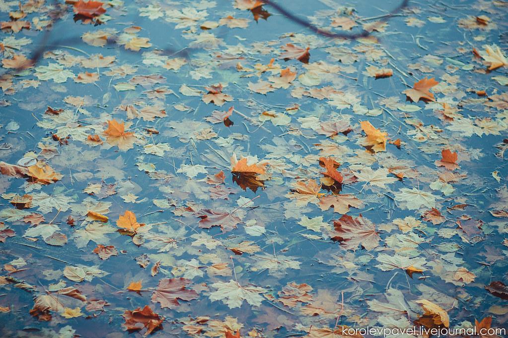 Autumn-216