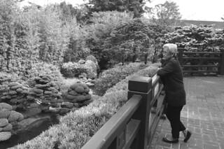 Japanese Tea Garden - Pond