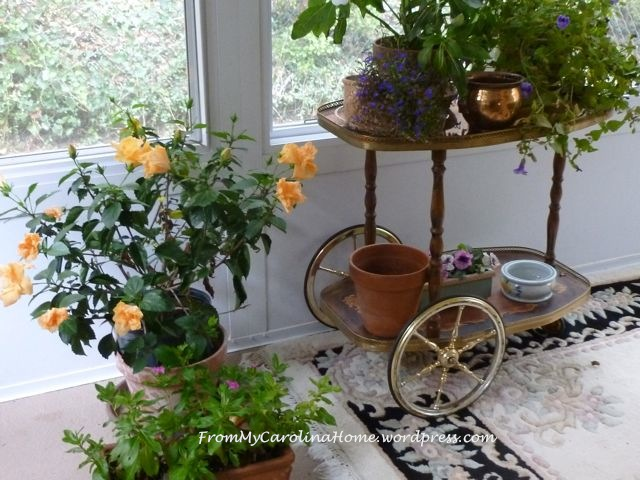 sun porch flowers