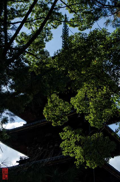 「緑燃ゆ」 仁和寺 - 京都