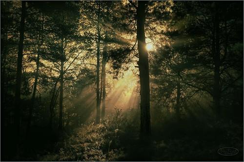 morning autumn trees sun nature forest landscape dawn europe reserve ukraine artphotography khortytsya
