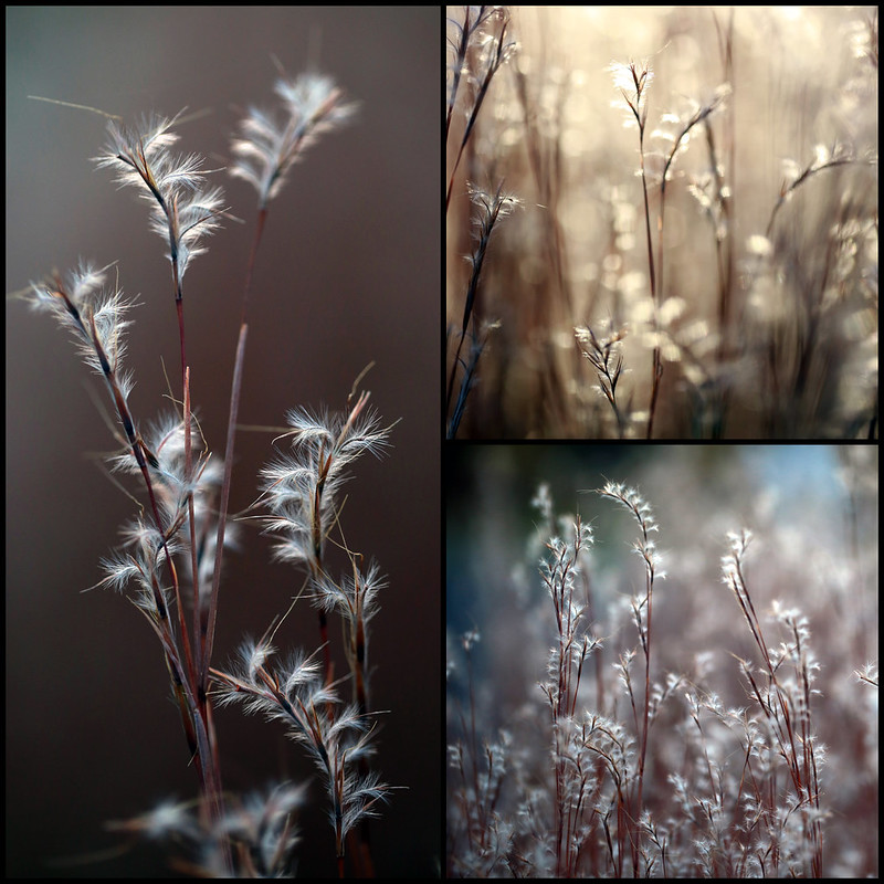 2014 11 16 - Little Bluestem Collage