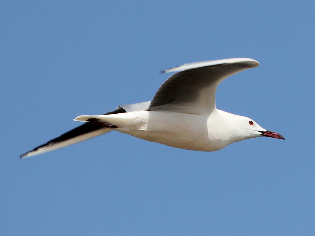 Фотография 'Морской голубок'