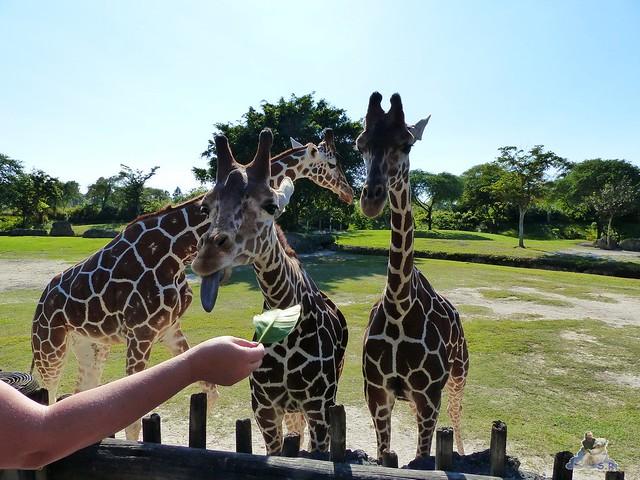 Zoo Miami 14.11.2014 116