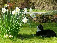 A l'ombre des fleurs