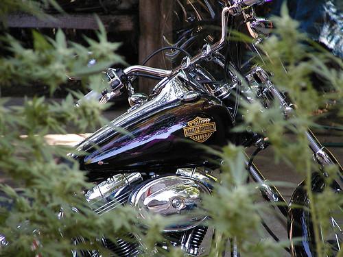 Harley_Davidson _108