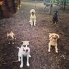 My pup posing with her playgroup pack. #ilovemymutt #ilovemydog #adoptadog