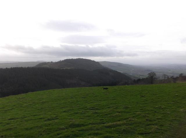 breidden hill 037