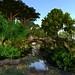 LICK sim Design Tropical Rainforest by Sera.Bellic