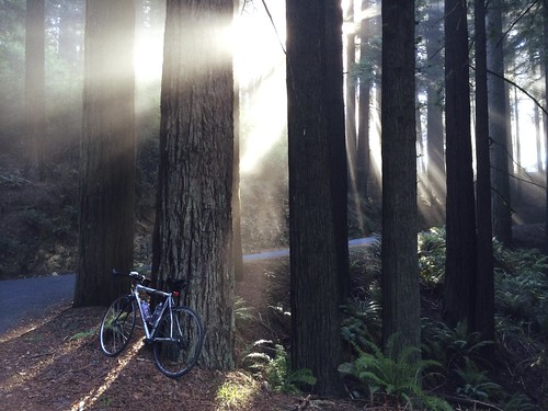 trees nature bike bicycle forest sunrise landscape mttam rays sunbeams iphone mttamalpais iphoneography iphone5s iphone5sbackcamera412mmf22