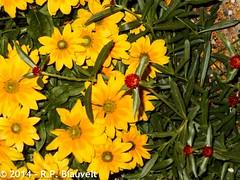 Denver Botanic Gardens Sep 14-25