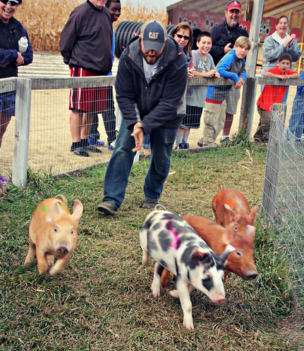 Pig Run at Fritzler Corn Maze