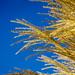 Gras am Bodensee - DSC0353