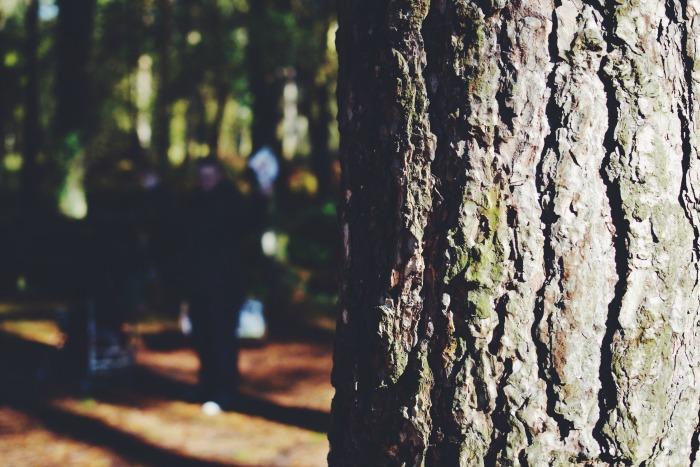 tree at moors valley