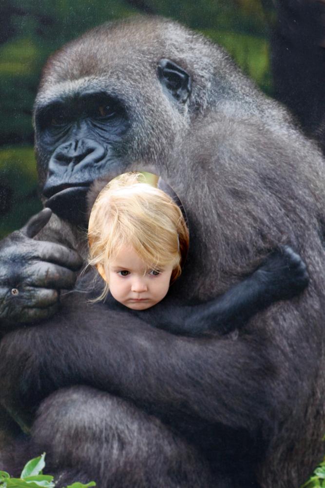 Gorilla Cutout