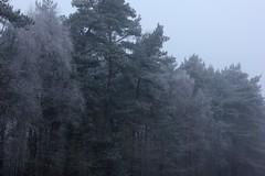 Im Winterwald (mit Schnee) 2015