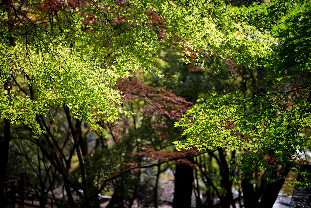 紅と緑の立体感