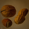 Eine kleine Auswahl an Nusssorten by Penti II