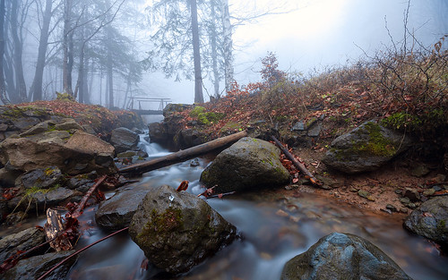 wood bridge wet water fog forest river landscape stream