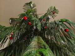 Karácsonyfa 1