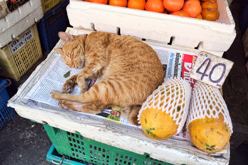 Papaya Cat, Bangrak Market, Bangkok :)