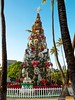 Honolulu Hale Christmas Tree
