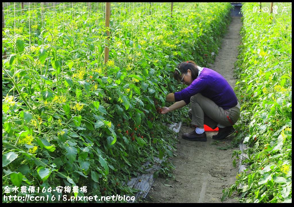 金水農情164-安梅農場_DSC8329