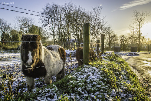 lighting trees ireland winter light sunset sky horse snow detail nature beautiful beauty grass skyline clouds contrast rural photoshop fence landscape evening aperture nikon natural wildlife perspective naturallight belfast textures northernireland vignette depth ulster lightroom antrim williambrownphotography