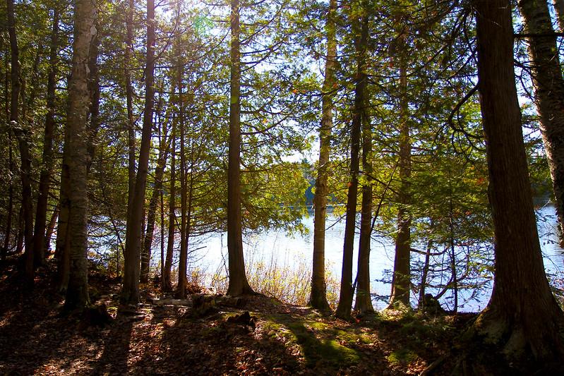 silent lake 4