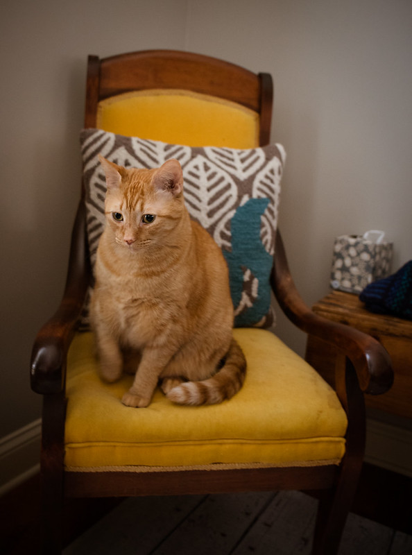 Remus in the Chair