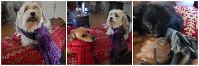 Dogs with Scarves