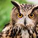 Owl by Rich Byham