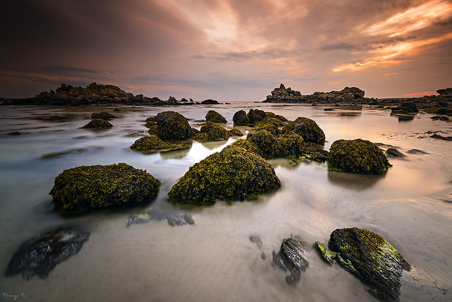 Seaweeds on the Rocks