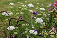 que c'est beau les fleurs