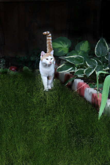 Patches Pays A Visit To Our Garden