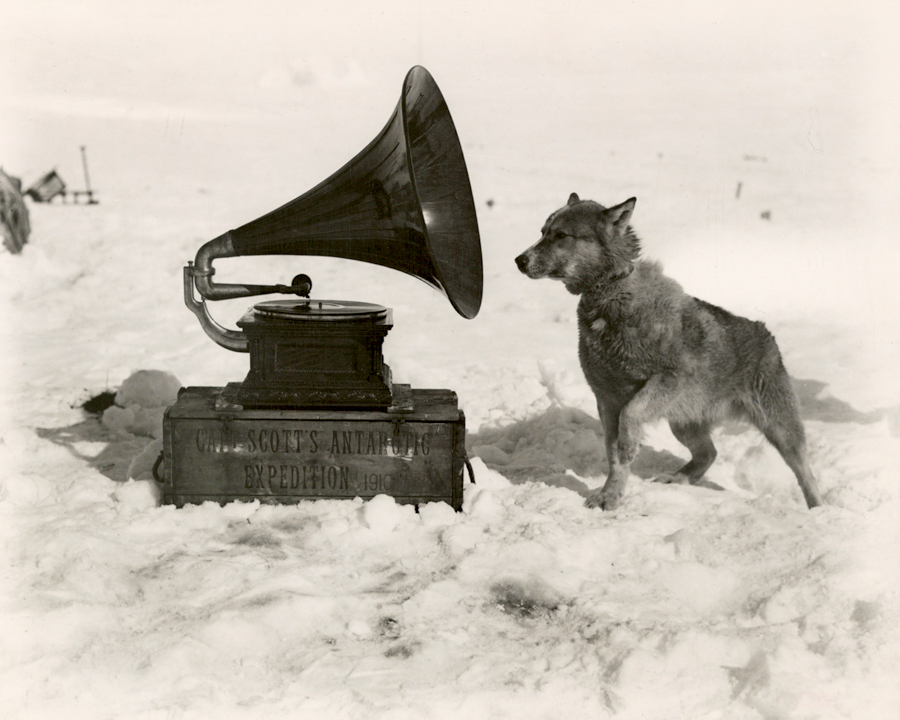To entertain the men, Captain Robert Scott took a gramophone on his South Pole Expedition. Chris, one of his dogs, was apparently also a fan, September 1911