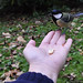 just for fun- great tit on my hand by Uta Naumann