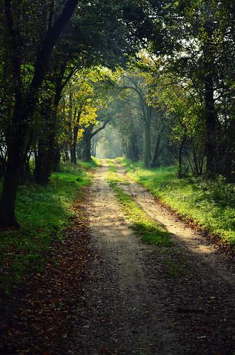 road morning las autumn trees light sun tree green nature colors leaves forest sunrise way warm europe magic poland polska natura jesień
