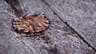 Wintry Leaf