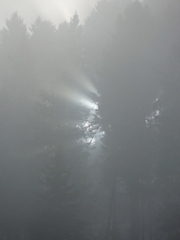 Sun peeking through the fog