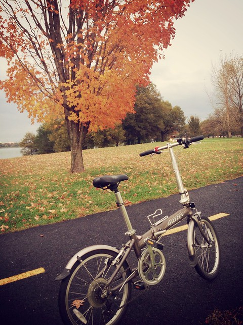 Peak leaves on the Mt Vernon Trail #bikedc