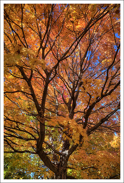 Forest Park Fall Foliage 2014-10-26 3