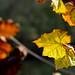 FTIG Fall Foliage