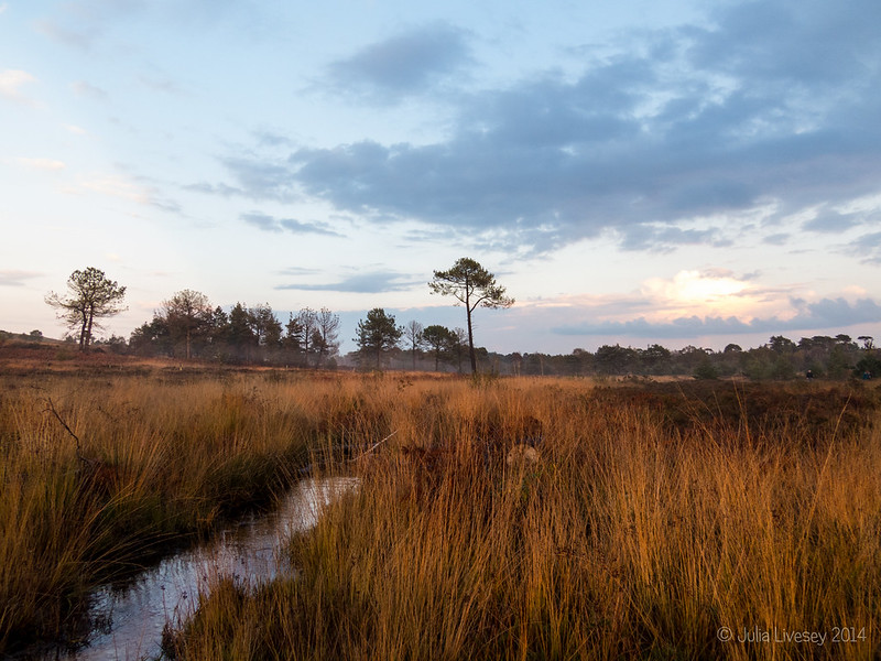 Canford Heath at sunset