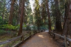 Kings Canyon & Sequoia - 50