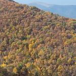 Fall colors, Shenandoah