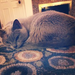 Gabby #catsofinstagram