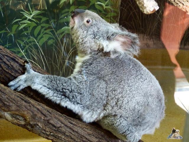 Zoo Miami 14.11.2014 174