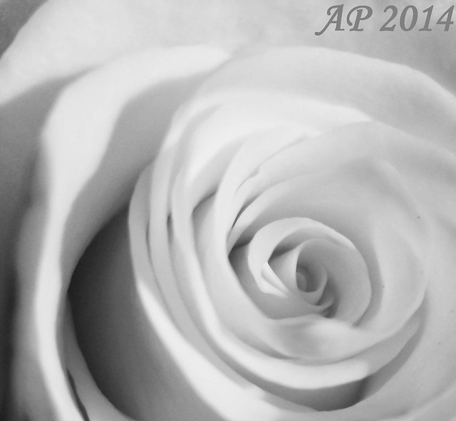 Tourbillon floral / Floral Swirl